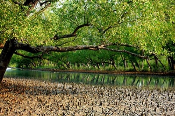 Sundarbans fire under control