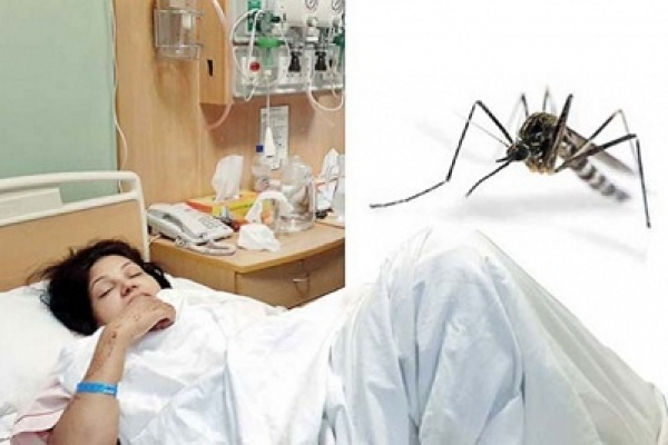 5 dengue patients die in Dhaka and Barishal