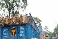 30km gridlock on Dhaka-Tangail highway