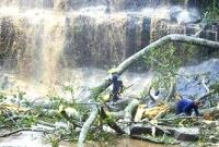 Ghana waterfall: Many dead in Kintampo freak tree accident